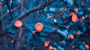 Превью обои розы, сад, куст, дерево, размытость