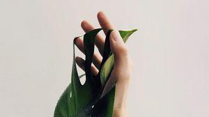 Превью обои рука, лист, минимализм, растение, капли