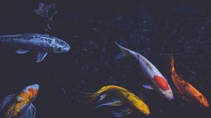 Превью обои рыбы, подводный мир, плавать