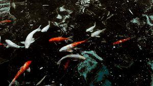 Превью обои рыбы, вода, плавание