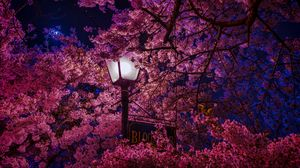 Превью обои сакура, цветет, фонарь, ночь, весна
