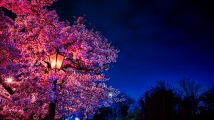Превью обои сакура, цветы, фонарь, цветет, вечер, весна