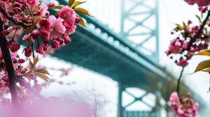 Превью обои сакура, цветы, розовый, мост, весна