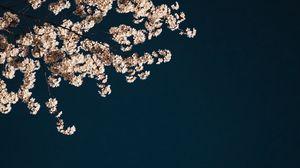 Превью обои сакура, ветки, цветы, минимализм, эстетика