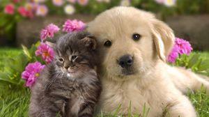 Превью обои щенок, котенок, трава, цветы, пара, дружба