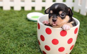 Превью обои щенок, собака, чашка