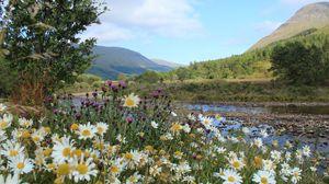 Превью обои шотландия, горы, река, трава, ромашки