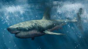 Превью обои акула, хищник, море, под водой, арт