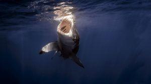 Превью обои акула, море, под водой, зубы