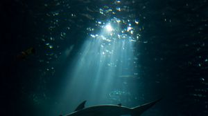 Превью обои акула, подводный мир, темный