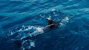 Превью обои акула, вода, хищник