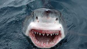 Превью обои акула, зубы, морда, оскал, злость
