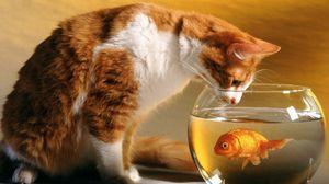 Превью обои аквариум, кот, любопытство, охота