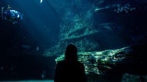 Превью обои аквариум, рыбы, силуэт, темный, подводный мир