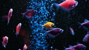 Превью обои аквариум, рыбы, вода, пузыри