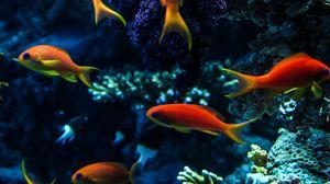 Превью обои аквариум, рыбы, вода, кораллы