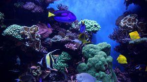 Превью обои аквариум, рыбы, водоросли, риф