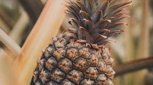 Превью обои ананас, фрукт, тропический, растение, листья
