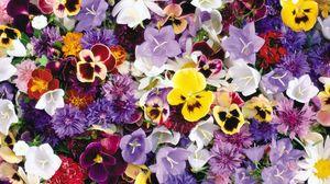 Превью обои анютины глазки, васильки, колокольчики, цветы, ассорти