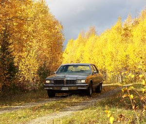 Превью обои автомобиль, серый, деревья, осень, желтый