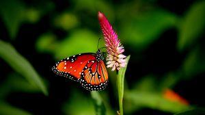 Превью обои бабочка, цветок, растение