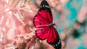 Превью обои бабочка, крылья, насекомое, трава, яркий, макро
