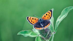 Превью обои бабочка, крылья, растение