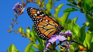 Превью обои бабочка, крылья, узоры, растение