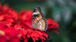 Превью обои бабочка, крылья, яркий, цветок, размытость