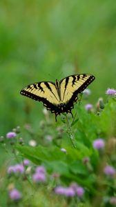 Превью обои бабочка, насекомое, растения, макро, размытие