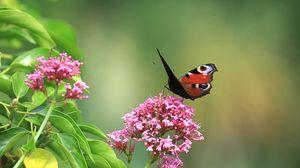 Превью обои бабочка, насекомое, цветы, растение, макро, фокус