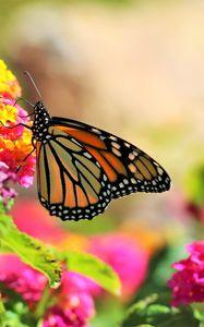 Превью обои бабочка, насекомое, цветы, яркий, макро