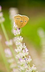 Превью обои бабочка, насекомое, цветы, макро, светлый