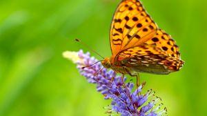 Превью обои бабочка, трава, крылья
