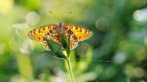 Превью обои бабочка, трава, растение