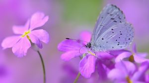 Превью обои бабочка, цветок, лепестки, пятна, сиреневый