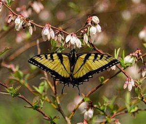 Превью обои бабочка, цветы, макро, желтый