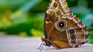Превью обои бабочка, узоры, крылья, поверхность, насекомое