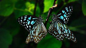Превью обои бабочки, крылья, узор, тропический