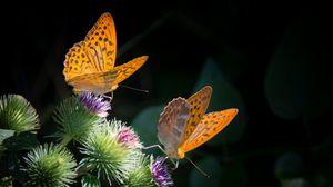 Превью обои бабочки, крылья, цветок