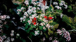 Превью обои бабочки, цветы, узоры, лето, размытость