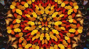 Превью обои бабочки, узоры, крылья, цветной