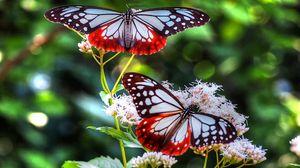 Превью обои бабочки, узоры, линии, насекомое