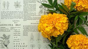 Превью обои бархатцы, цветы, листья, газета, макро