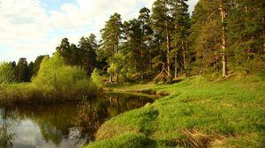 Превью обои берег, озеро, лес, зеленый, лето, хвойные, полдень