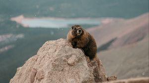 Превью обои бобер, камень, скала, животное, дикая природа