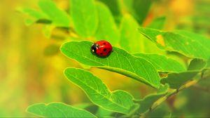 Превью обои божья коровка, насекомое, лист, макро, растение