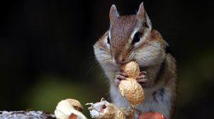 Превью обои бурундук, орехи, еда, сидеть