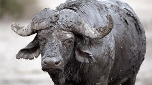 Превью обои буйвол, грязь, охлаждение