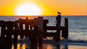 Превью обои чайка, море, закат, горизонт, прибой